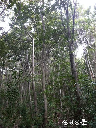 붉가시나무 숲 사진 2.jpg