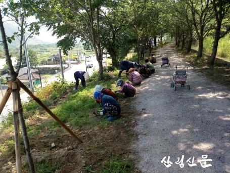 6. 월성동 숲머리마을 둘레길 코스모스 꽃길 조성(1).jpg